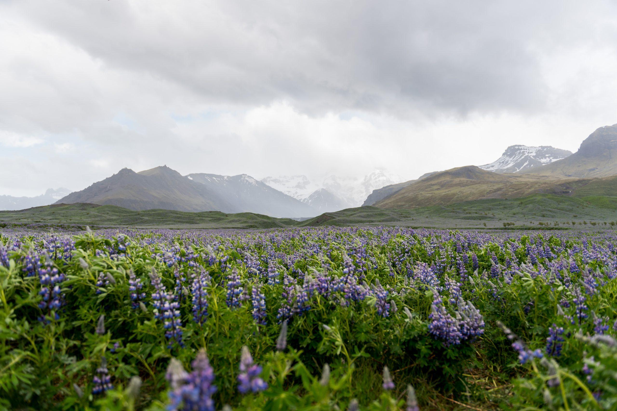 Die Küste der Highlands