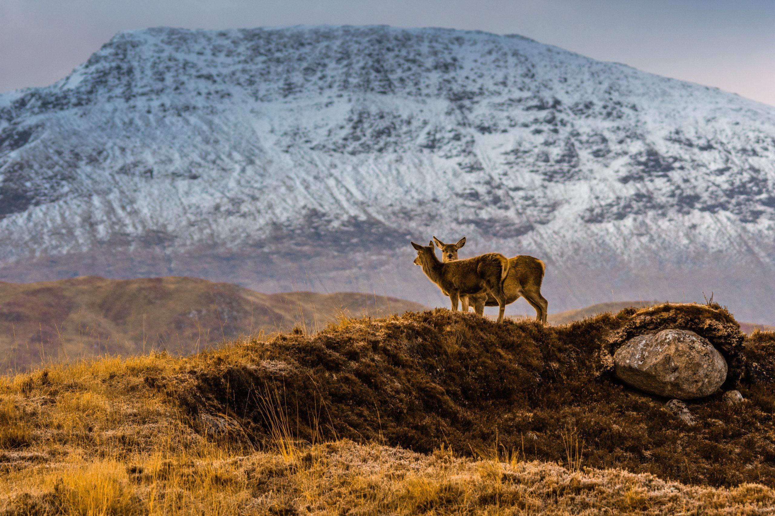 Individuelle Autorundreisen Schottland